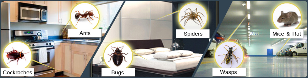 image for pest control Eastern Suburbs Melbourne